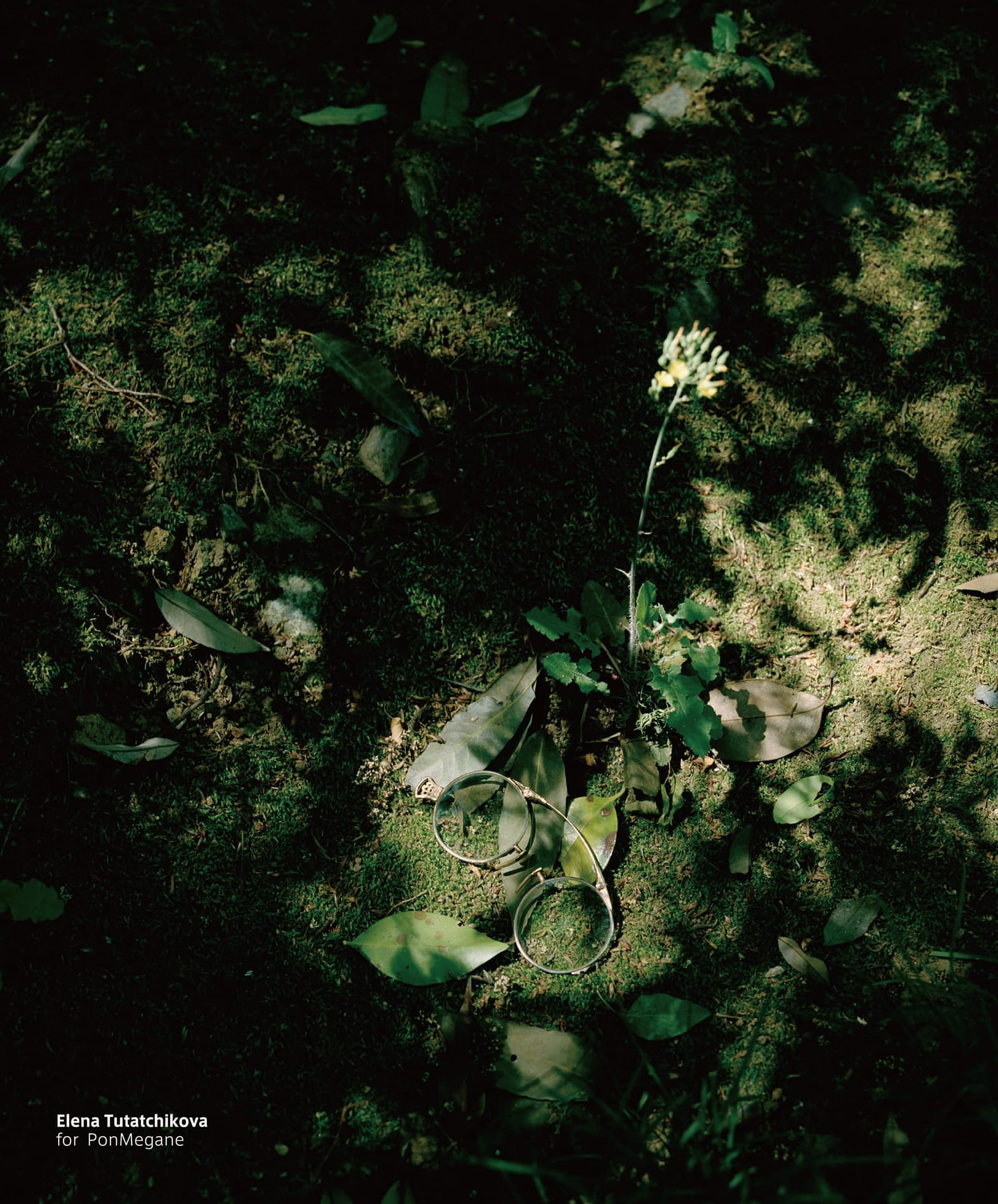 アーティストのエレナ・トゥタッチコワ 撮影のメガネ拭き 1