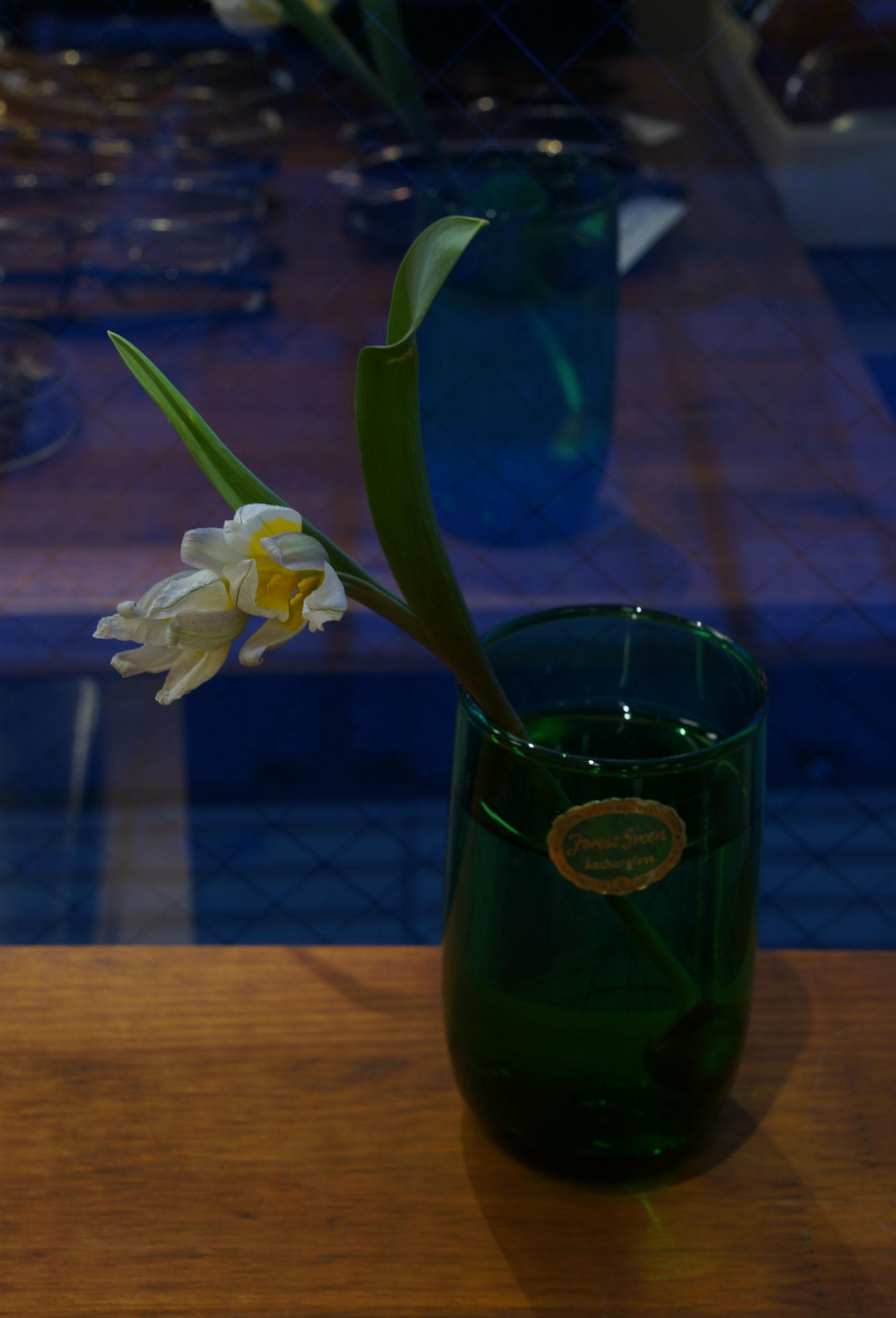 PONMEGANE-SHOPの花