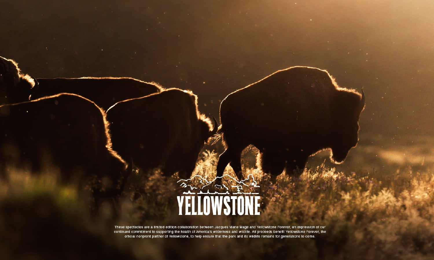 JMM YELLOWSTONE Forever